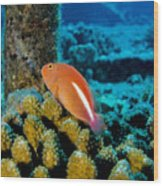 Fish On Coral Wood Print