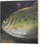 Fish Reflection Wood Print