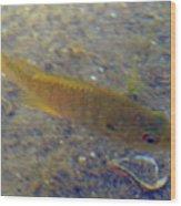 Fish Sandy Bottom Wood Print