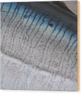Fish Scales Wood Print