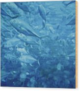 Fish Schooling Harmonious Patterns Throughout The Sea Wood Print