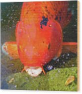 Fish Surprise Wood Print