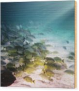Fish Swim In The Light Wood Print