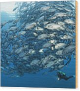 Fish Watch Wood Print
