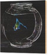 Fishbowl Wood Print by Tim Allen