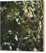 Fishing Cat Wood Print