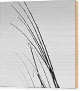 Fishing Poles - Bw Wood Print