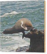 Fishing Sea Lion Wood Print