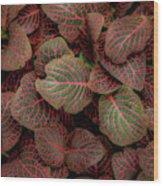 Fittonia Wood Print