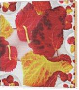 Five Autumn Leaves Wood Print
