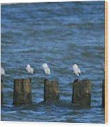 Five Birds Wood Print