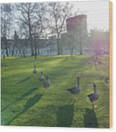 Five Ducks Walking In Line At Sunset With London Museum In The B Wood Print