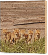 Five Fox Kits By Old Saskatchewan Granary Wood Print