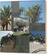 Five Fruit Of Israel Wood Print
