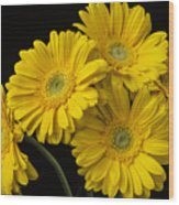 Five Gerbera Daisies Wood Print