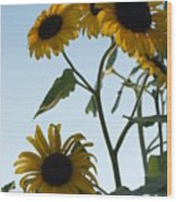 Five Sunflowers To The Sky Wood Print