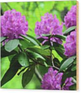 Five Wild Azaleas Blossoms Wood Print