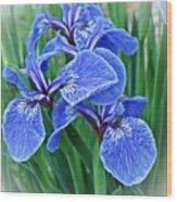 Flag Iris Blues Wood Print