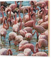 Flamboyance Of Flamingos Wood Print