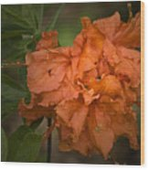 Flame Azalea Wood Print