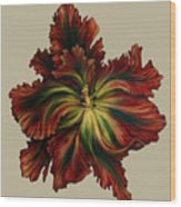 Flame Red Tulip II Wood Print