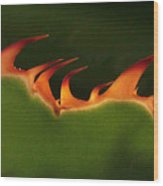 Flaming Aloe Wood Print