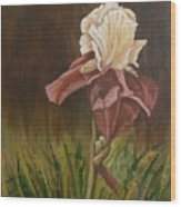 Flaming Bearded Iris Wood Print