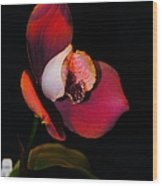 Flaming Orchid Wood Print