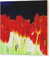 Flaming Red Tulips Wood Print