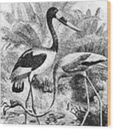 Flamingo & Jabiru Wood Print