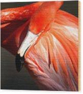 Flamingo - Over The Shoulder Wood Print