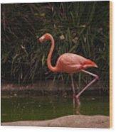 Flamingo 1 San Diego Zoo Wood Print