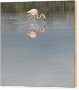 Flamingo 2 Wood Print