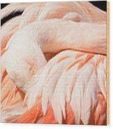 Flamingo Abstract Wood Print