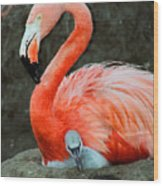 Flamingo And Baby Wood Print