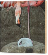 Flamingo And Chick Wood Print