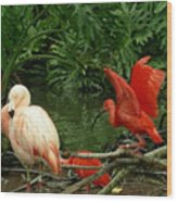 Flamingo And Scarlet Ibis Wood Print