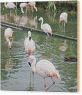 Flamingo Bath  Wood Print