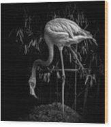 Flamingo Classic Bw Wood Print