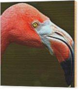 Flamingo Closeup Wood Print