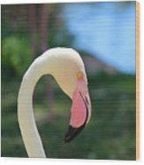 Flamingo Closeup Wood Print