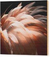 Flamingo Feathers Wood Print