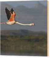 Flamingo Flight Wood Print