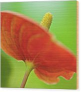 Flamingo Flower 2 Wood Print