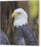 Flamingo Gardens - Focused Bald Eagle Wood Print