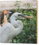 Flamingo Gardens - Great Egret Profile Wood Print