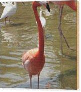 Flamingo II Wood Print