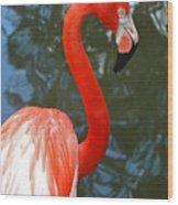 Flamingo In Profile Wood Print