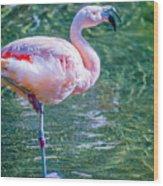 Flamingo In Still Waters Wood Print