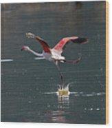 Flamingo Kick Off  Wood Print